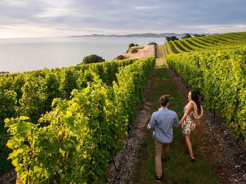 blenheim marlborough wine tour