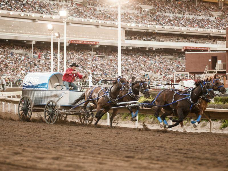 chuckwagon race calgary stampede
