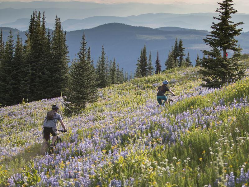 Cycling through alpine blossom in Sun Peaks