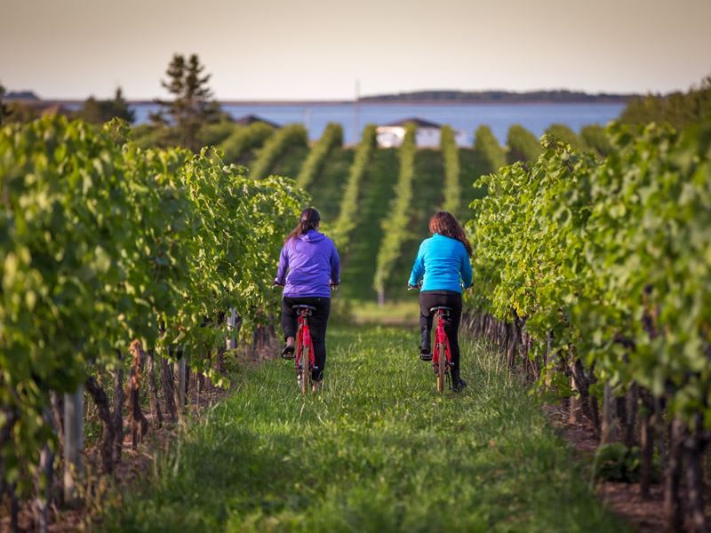 cycling vineyards of nova scotia