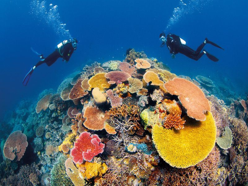 divers in great barrier reef   tourism images