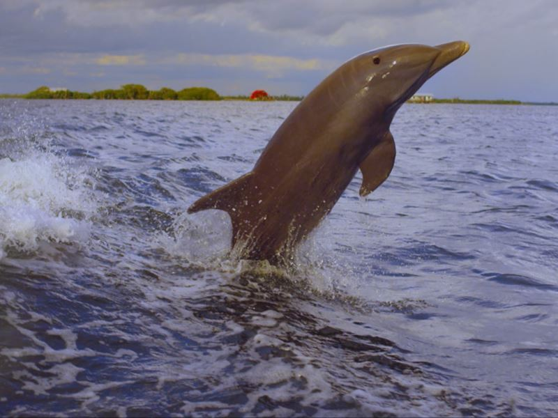 dolphin watching in fort myers