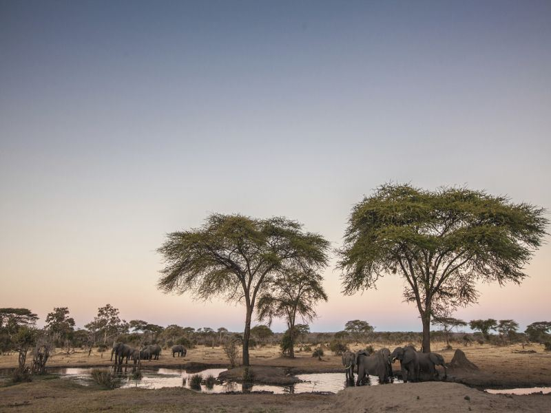 elephants at the watering hole at chobe np