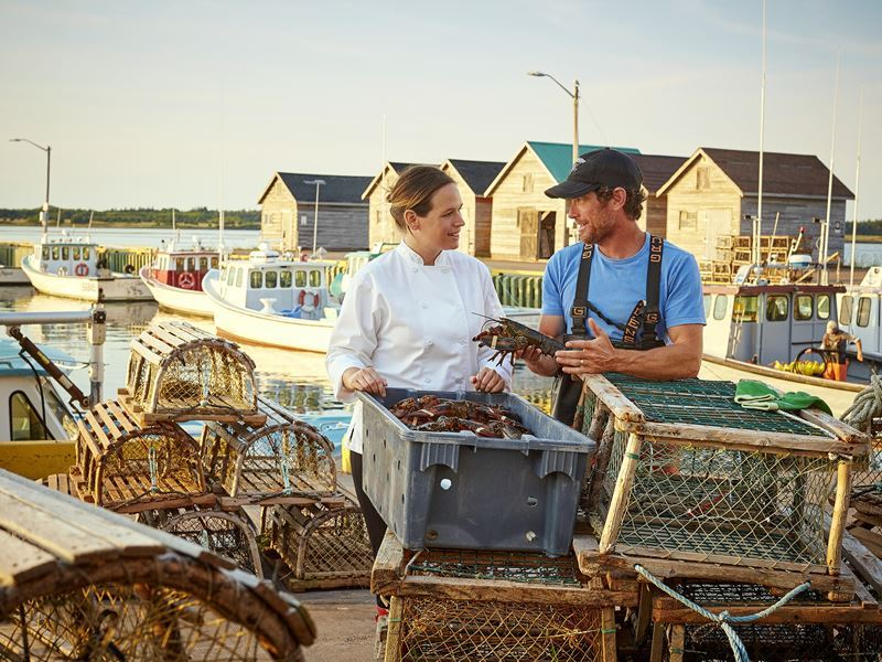 fresh lobster sourced in prince edward island