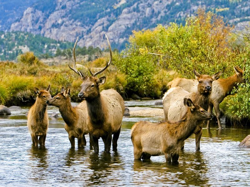 herd of elk rocky mountain national park colorado matt inden miles