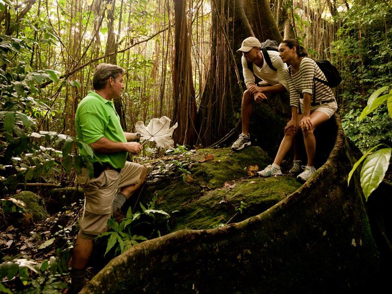 hiking through the st kitts rainforest with greg safaris