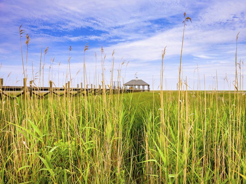 Louisiana marshland