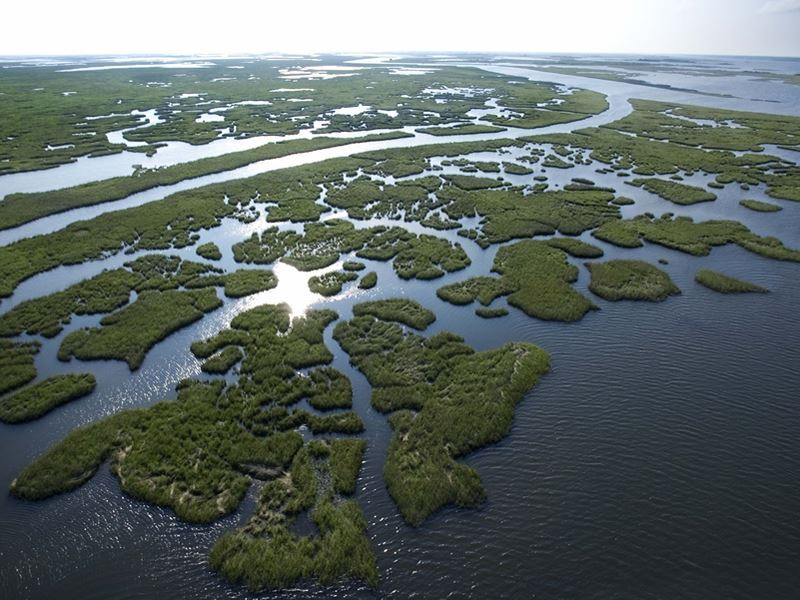 louisiana swamps aerial view