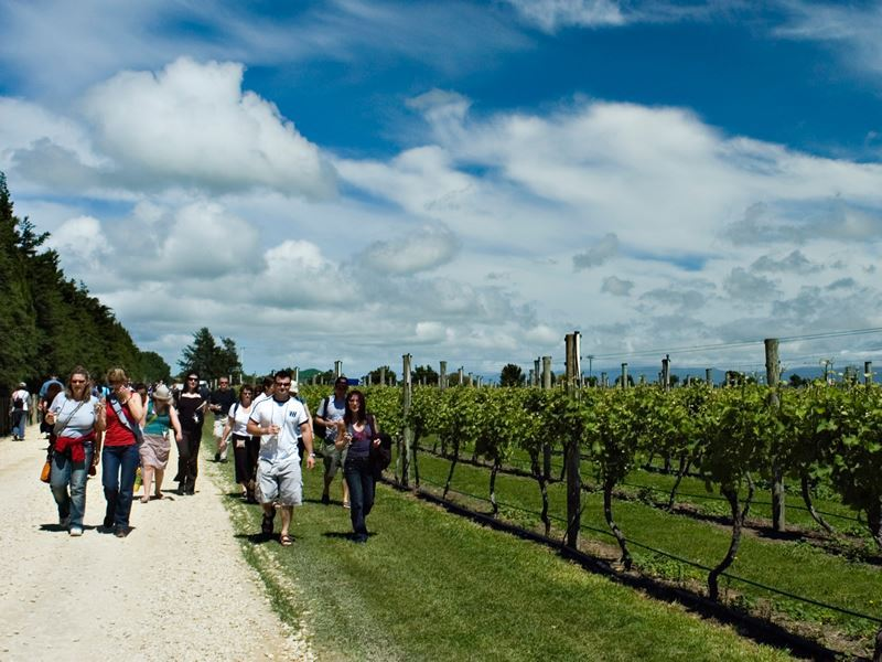 martinborough vineyard visit wairarapa