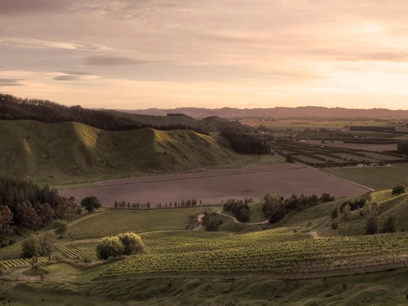 millton vineyards winery