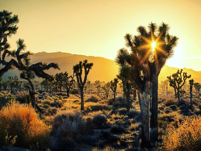 sundown joshua tree national park