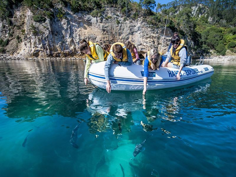 te whanganui a hei marine reserve coromandel legend photography