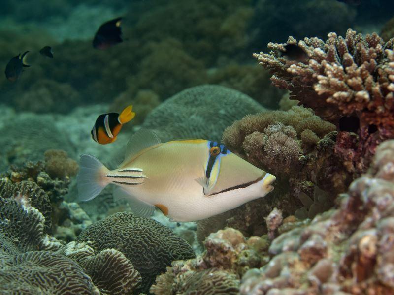 underwater oman