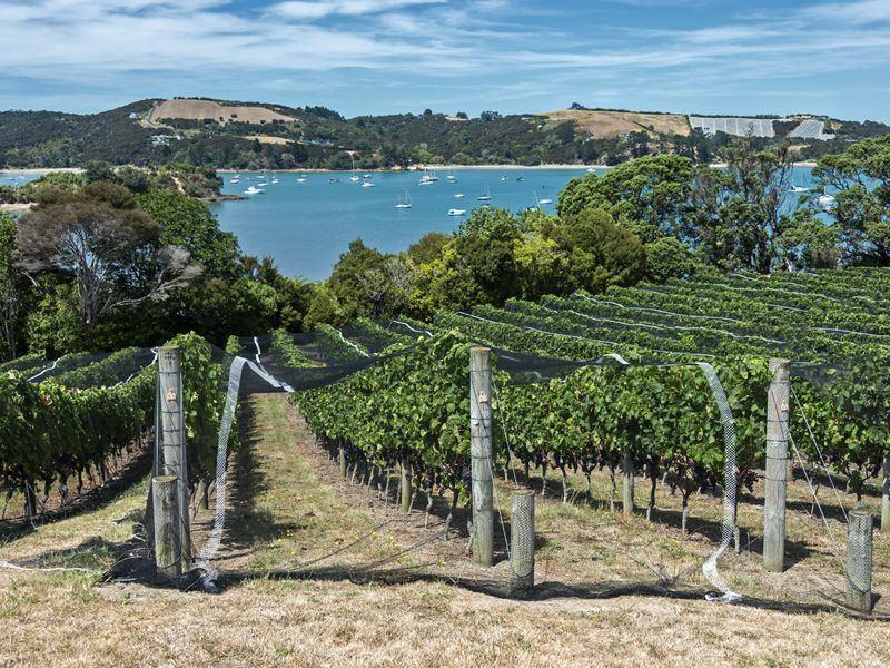 waiheke island winery