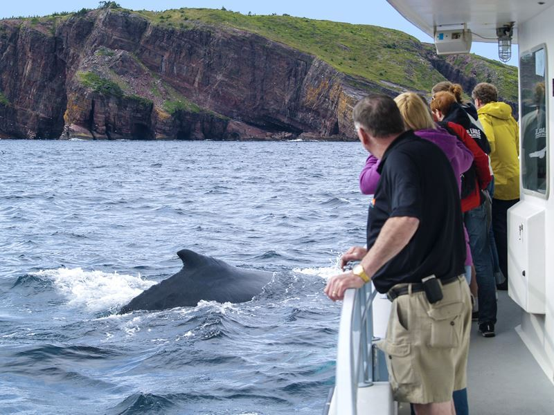 whale watching bay bulls avalon obriens boat tours