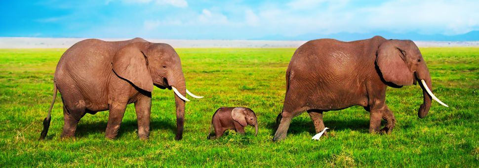 Elephant family of Amboseli National Park