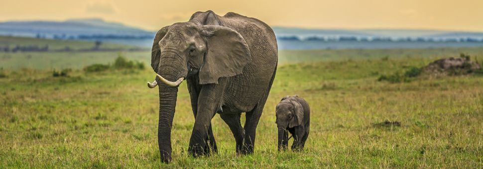 Mother and baby elephant in Maasai Mara National Park