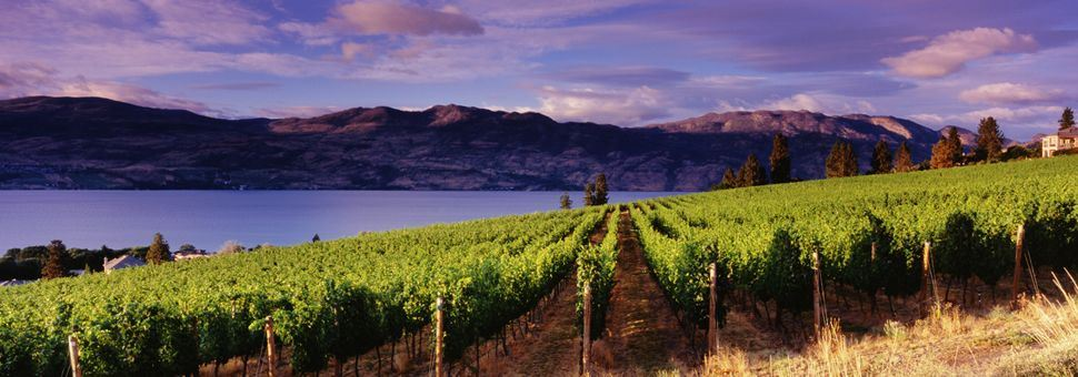 Vineyards of Kelowna