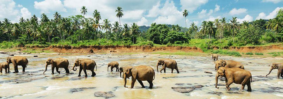 Pinnawala elephant orphanage, Sri Lanka